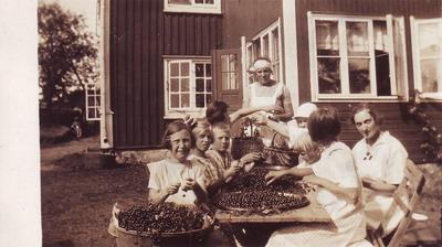 Bärrensning på Klastorps kollo på 30-talet